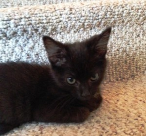 Black kitten on the stairs