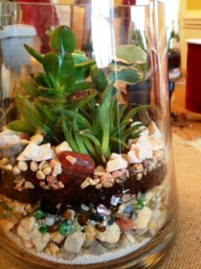 Terrarium of rocks and succulents